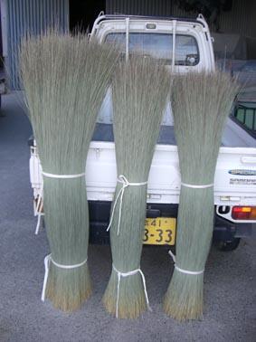 い草の長さの違い画像