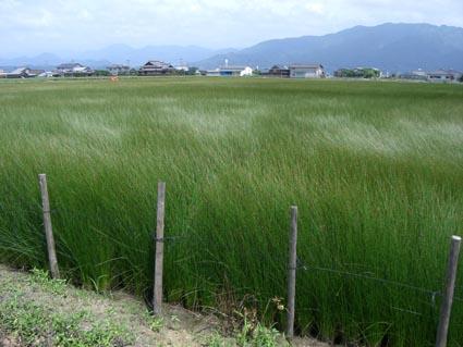 熊本県八代市い草田画像